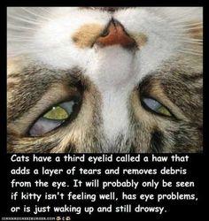Fun Cat Facts #42