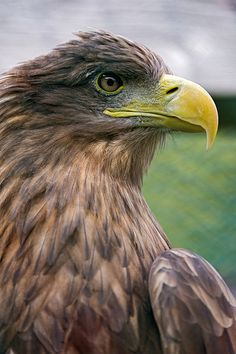 Close profile of a brown bird of prey