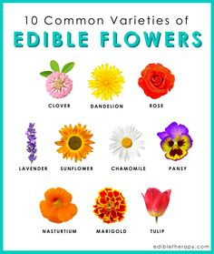 We give you a list of edible flowers, their unique tastes and how they can be used creatively in food. You probably have these growing your back yard.