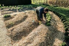 Organic and inorganic mulches are available as vegetable garden mulch options. But which is the best vegetable mulch? Learn the different types in this article and their attributes to help you make an informed decision on mulch for vegetable plants.