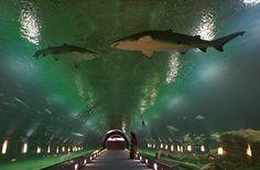 L'Oceanografic Aquarium (Valência – Espanha)