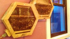 Beecosystem: indoor bee keeping (? Honey Bee Hives, Honey Bees, Small Bees, Bee House, Indoor Pets, Indoor Outdoor, Bee Happy, Save The Bees, Busy Bee