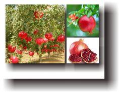 Rodie Spirituality, Vegetables, Painting, Food, Art, Plant, Art Background, Painting Art, Essen