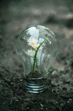 Growth in a light bulb