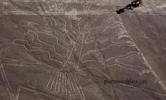 These figures were drawn by Nazca tribes around the time of the birth of Jesus Christ, and sometimes ranging over six hundred feet wide. (phenomenalplace, 2013)