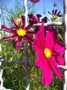 https://flic.kr/p/wwK5ZU | Summer flowers 5
