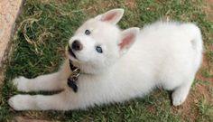 white-husky-blue-eyes-names