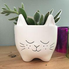 #fortheloveofcats