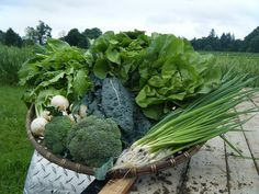 CSA Recipes from Sauvie Island Farm CSA-lots of good ideas for cooking with your CSA veggies!