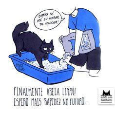 Seu gato adora caixas, morde seu braço com a mesma intensidade que o lambe, é…