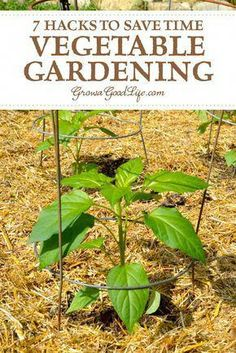 7 Hacks to Save Time Vegetable Gardening: Don't let limited time prevent you from growing a vegetable garden. Check out these hacks to help you save time gardening and grow food. Organic Vegetables, Growing Vegetables, Garden Pests, Garden Tools, Box Garden, Garden Ideas, Garden Forum, Garden Cart, Potager Garden