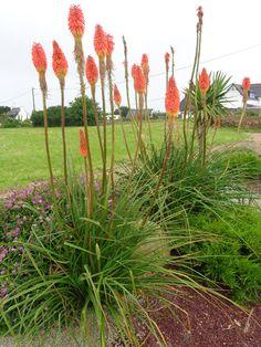Entretien palmier tronc rouge jardin pinterest blog for Entretien jardin 65