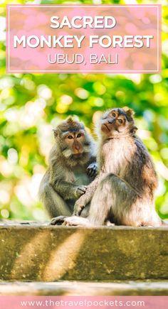 Monkey Forest in Ubud, Bali, Indonesia
