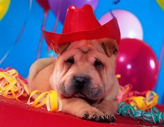 Dog in a cowboy hat...any shar pei is cute to me