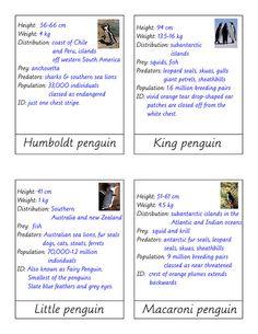 penguin3 info by jojoebi, via Flickr