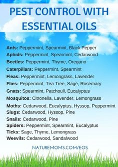 Use essential oils to repel and remove pests such as bugs, insects, and spiders from home and garden