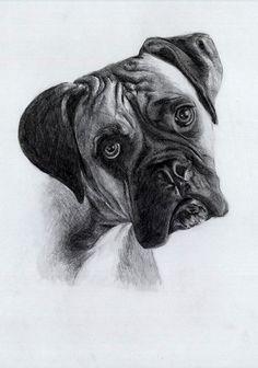 A5 boxer drawing en 2018 boxer pinterest - Boxer chien dessin ...