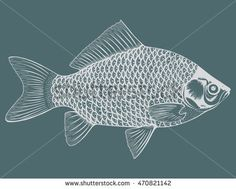 Stylized fish. Carp. River fish. Black and white drawing by hand. Line art. Tattoo. Doodle. Graphic arts.