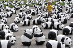 Pandas. Pandas everywhere.