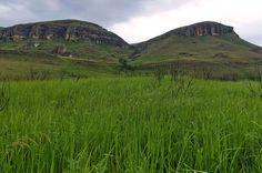 Campo de hierva en la Reserva Natural Giants Castle KwaZulu-Natal, Drakensberg, Sudáfrica - intsys/Getty Images