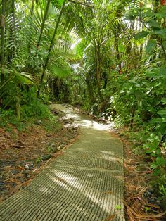 El Yunque Rainforest how can you not fall in love worth a place like this....