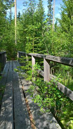 Kaffitreili / coffee trail. No snakes (alive) today. Geocaching in Jurva, Kurikka (Finland)