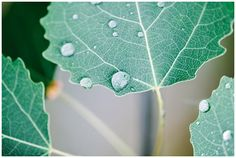 macro leaf, photo by Absolutely white