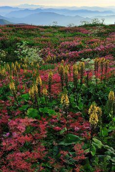 Ibukiyama mountain in Japan-Beautiful!
