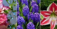 ¿Quieres llenar de aroma tu jardín los 365 días del año?, ¿y de belleza?