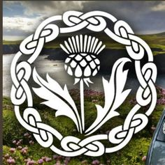Show your love for Scotland with a Scottish Thistle Decal!* Besides a car window, your Scottish Thistle decal will adhere to any smooth surface such as a laptop, a mirror or your bedroom window. Outlander Gifts, Outlander Tv, Outlander Wedding, Outlander Series, Outlander Tattoos, Scottish Thistle Tattoo, Dragonfly In Amber, Celtic Art, Celtic Designs