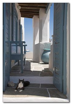 Cat enjoying the Island of Santorini, Greece
