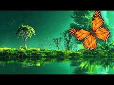 Healing Music - Meditation Forest - YouTube
