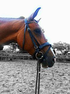 Wonderlijk 58 beste afbeeldingen van Paarden (Horses) - HorseStep in 2012 GJ-31