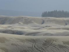 Some of the Dunes! Sandland Adventures in Florence, OR