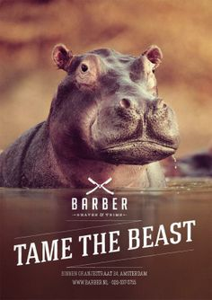 Barber Shaves & Trims: Tame the beast, Hippo