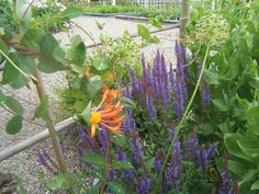Gardening with the Colour Wheel | Sensible Gardening and Living