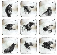 Notes on Crows -collection of 9