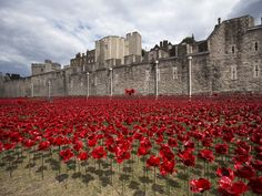 "800,000 red poppies pour like blood from The Tower Of London- """"Blood Swept Lands and Seas of Red"""