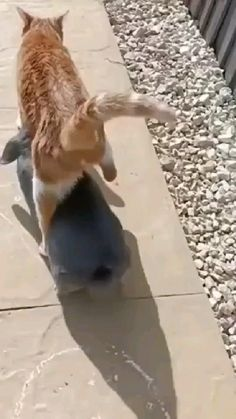 Funny Cute Cats, Cute Funny Animals, Cute Animal Videos, Funny Animal Pictures, Hamsters As Pets, Funny Animals With Captions, Fancy Cats, Mundo Animal, Animal Jokes