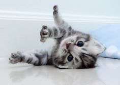 Luna, Oliver and more: We've rounded up the most popular kitten names of the year.