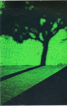Escena árbol + sombra, Pete Turner