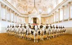 The Spanish Riding School of Vienna, Austria, is a traditional riding school for Lipizzan horses, which perform in the Winter Riding School in the Hofburg. Not only is it a center for classical dressage, the headquarters is a tourist attraction in Vienna that offers public performances as well as permitting public viewing of some training sessions.