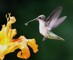 April 5 – Hummingbirds are on their way back to Connecticut. One was sighted in in Connecticut on April 3rd and one was seen in Massachusetts yesterday.  The hummers seem to be coming back to…