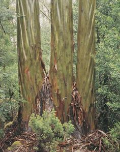 """The Wilderness Gallery - Photograph by Peter Dombrovskis 