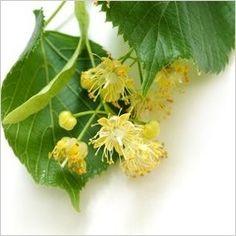 stava sirup z lipy lipoveho kvetu recept postup navod priprava suroviny vyroba ingredience