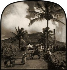 1890 Nevis Sugar Estate, albumen print, The Caribbean Photo Archive | Flickr -
