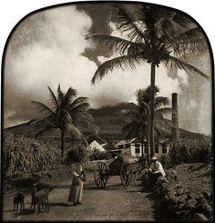 1890 Nevis Sugar Estate, albumen print, The Caribbean Photo Archive | Flickr -