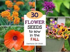 30 Flower Seeds to Sow in the Fall : Want to get a jump start on spring blooms? There are many flowering plants you can sow from seed as the weather gets cooler in the fall. After a winter chill, they will resume growing in the spring. House Plants, Garden Plants, Flowering Plants, Autumn Garden, Summer Garden, Garden Oasis, Garden Fun, Garden Gate, Winter Plants