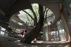 'Ring around a tree'. Japanese Kindergarten built around a tree. Hundertwasser would have loved this!