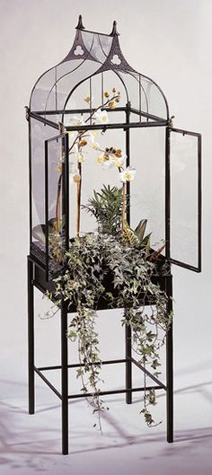Tall Regent House Conservatory - terrarium - like a Wardian case - perfect for orchids - houseplants - indoor plants